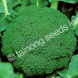 Broccoli Green Mountain