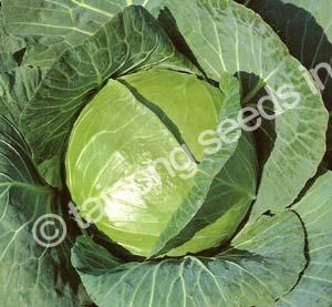 CabbageLegacy