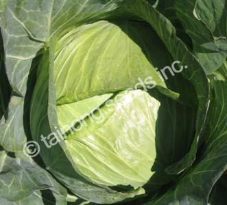 CabbageShoshudori