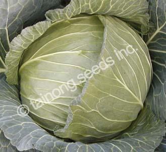 CabbageSummerBall