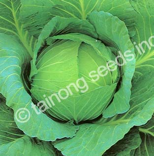 Cabbage Top Performer