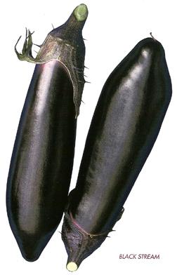 EggplantBlackStream