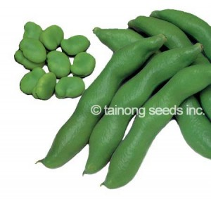 Fava Bean copy