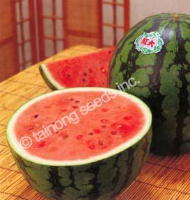 watermelonkohdai72